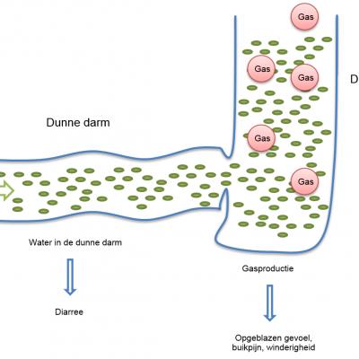 FODMAP-arm dieet kan prikkelbare darmsyndroom verlichten
